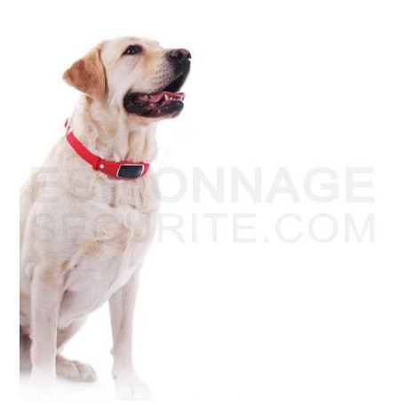 Collier de chien traceur gps